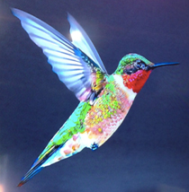Google Hummingbird: Major Change in How Google Ranks Websites